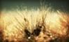 岡山県に住む身長155cmの小柄ロリなでも乳はアホみたいにデカい四十路熟女とダブル不倫!【イメージ画像1】