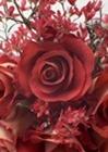 お花屋さんに勤めている清楚系の主婦お姉さんを言葉巧みにホテルに連れ込んで中出ししたったw【イメージ画像1】