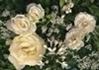 貞操観念というものをまったく持っていないド変態ヤリマンビッチバカ嫁が70歳義父の黒光りチンポに欲情【イメージ画像1】
