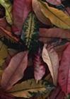 ピッチピチのワンピースを着たむっちりおばさんに寝室に誘われて小便臭い黒あわびをクンニさせられた体験談【イメージ画像2】