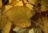今はホットヨガという健全な趣味を持つ妻も、昔は浣腸おなかパンパン脱糞プレイが好きな変態でした。【イメージ画像2】